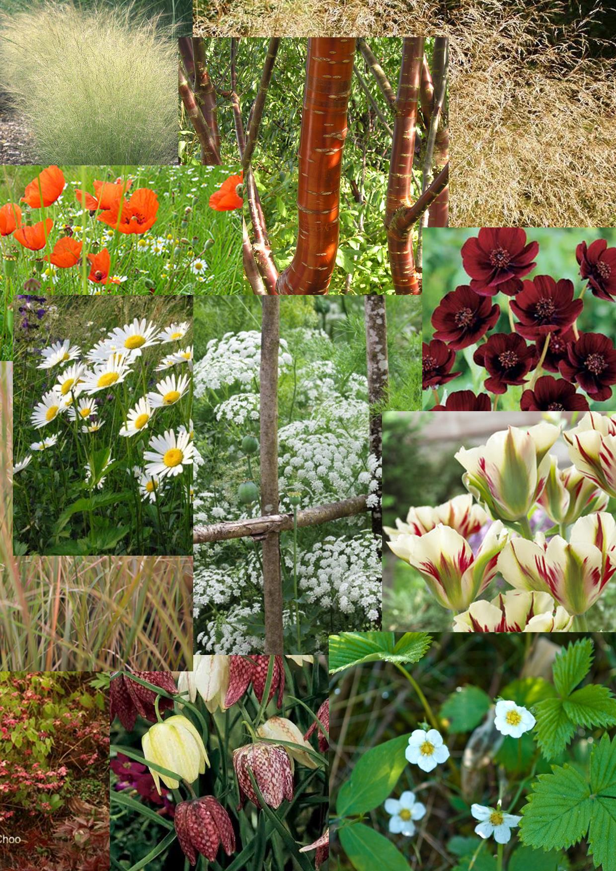 Big news get ready rhs malvern spring festival 15 for Redesign my garden